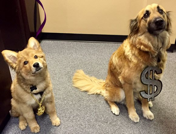 Our dogs inside our pawn shop